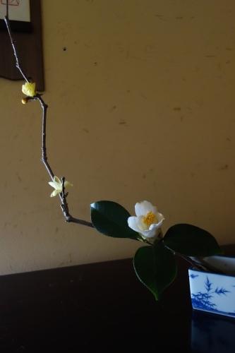 早春のお楽しみ_a0197730_21550277.jpg