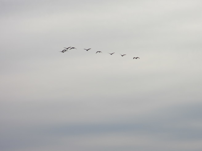 朝活!白鳥を撮る・・続きです_f0364035_12035435.jpg