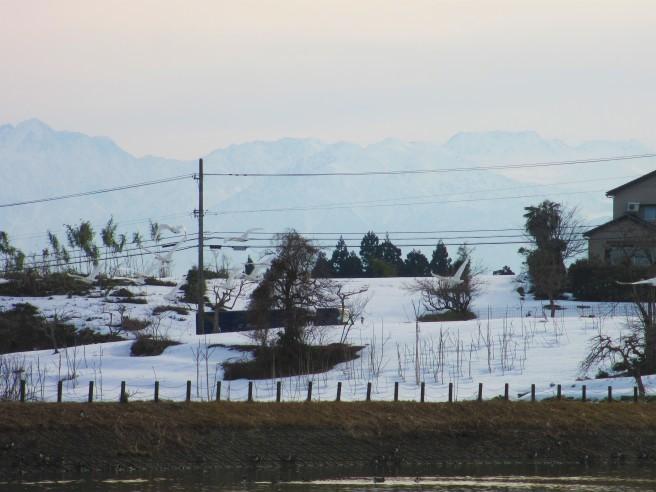 朝活!白鳥を撮る・・続きです_f0364035_20381658.jpg