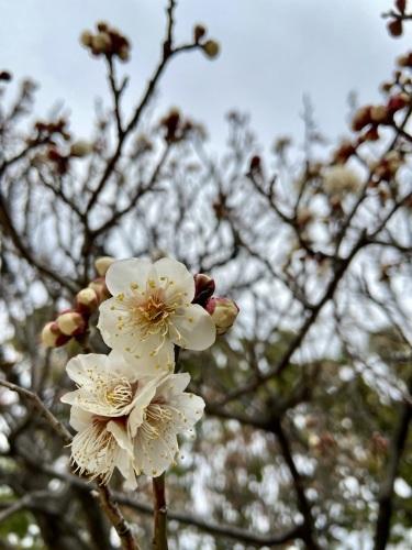もうすぐ春!!_e0071652_10340655.jpeg