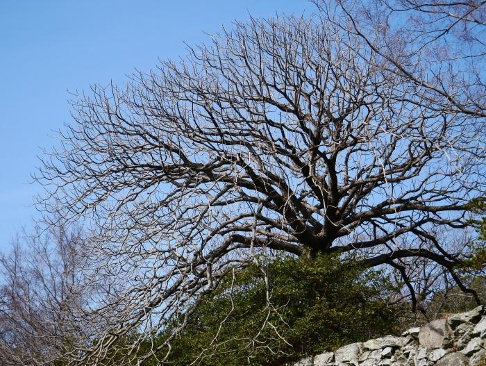 和歌山城冬景色  2021-02-17 00:00_b0093754_22523234.jpg