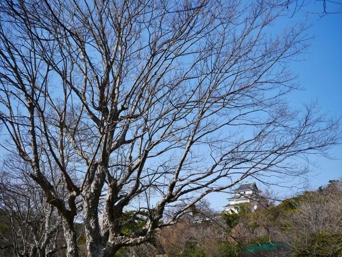 和歌山城冬景色  2021-02-17 00:00_b0093754_22531578.jpg