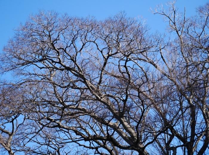 和歌山城冬景色  2021-02-17 00:00_b0093754_22541758.jpg