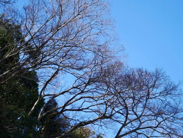 和歌山城冬景色  2021-02-17 00:00_b0093754_22544224.jpg
