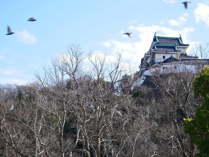 和歌山城冬景色  2021-02-17 00:00_b0093754_22550156.jpg