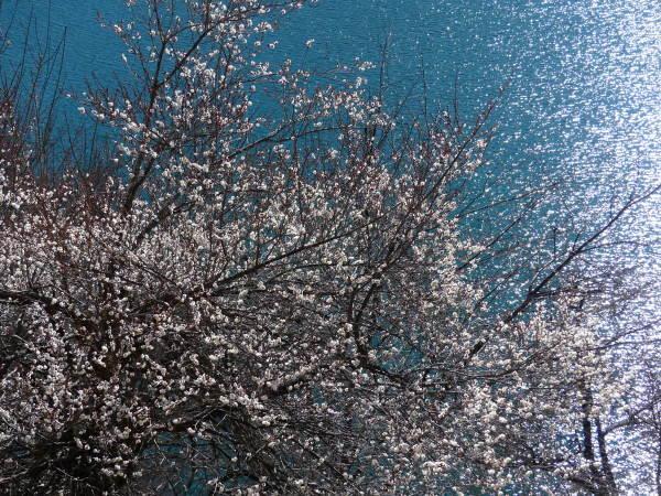 冬の奥多摩湖 見はらしの丘のカモシカ_a0351368_21544086.jpg