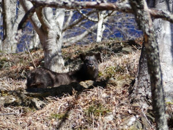 冬の奥多摩湖 見はらしの丘のカモシカ_a0351368_21564593.jpg