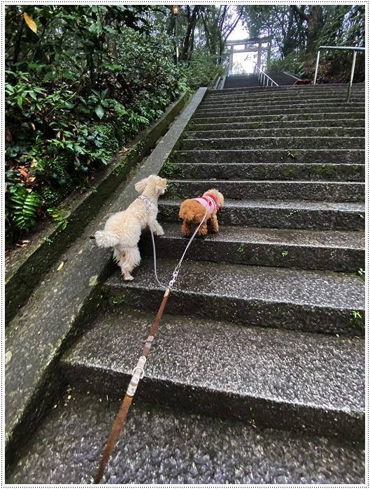 階段もグイグイ!!ついて行けな~い_b0175688_23330041.jpg