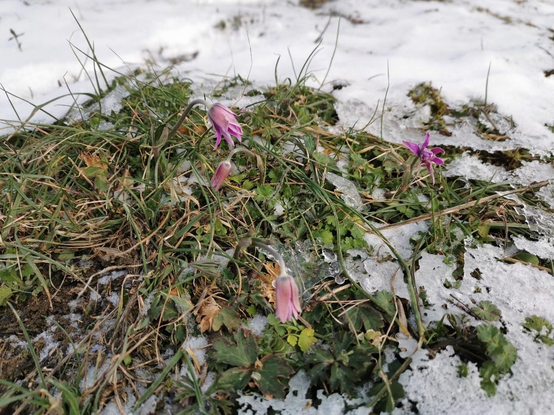 日曜日の雪散歩_f0106597_20043031.jpg