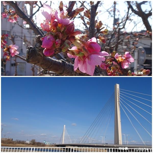 パルシキメーターの事、長女の見舞い、桜ケ丘まで散歩_c0051105_13332012.jpg