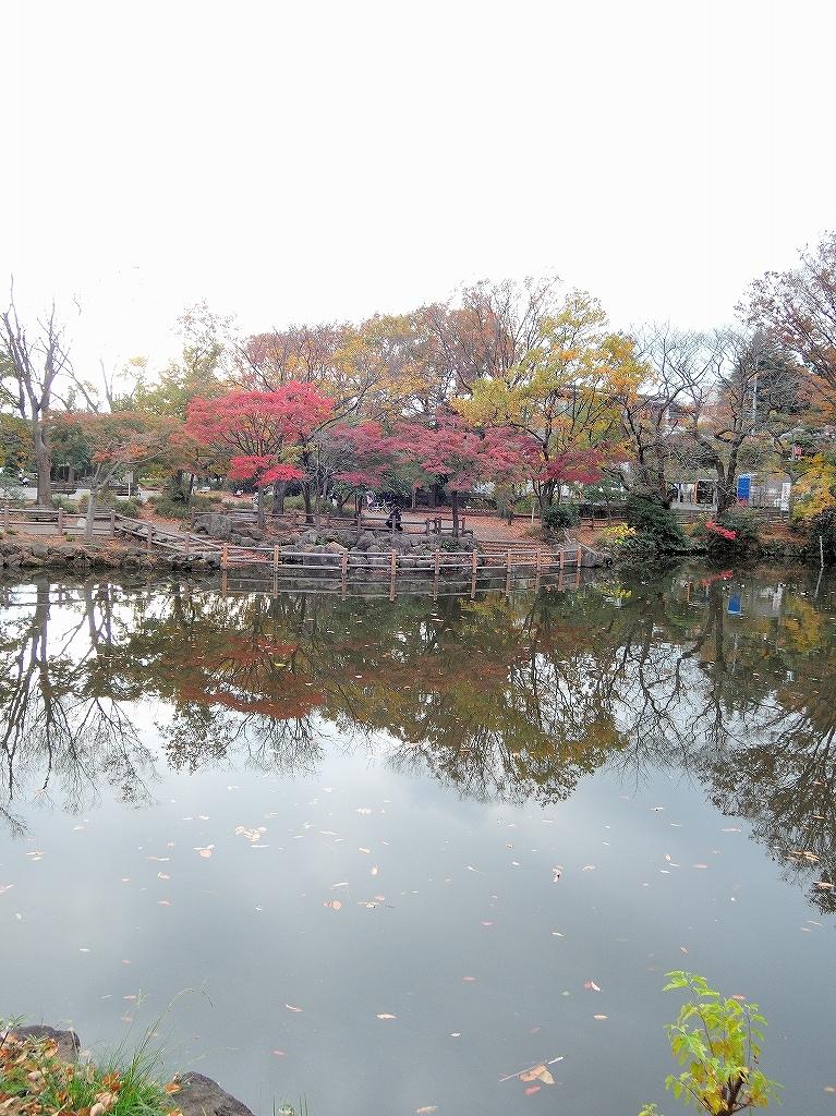 ある風景:Kikuna pond, Yokohama@Dec~Jan #1_d0393923_22290907.jpg