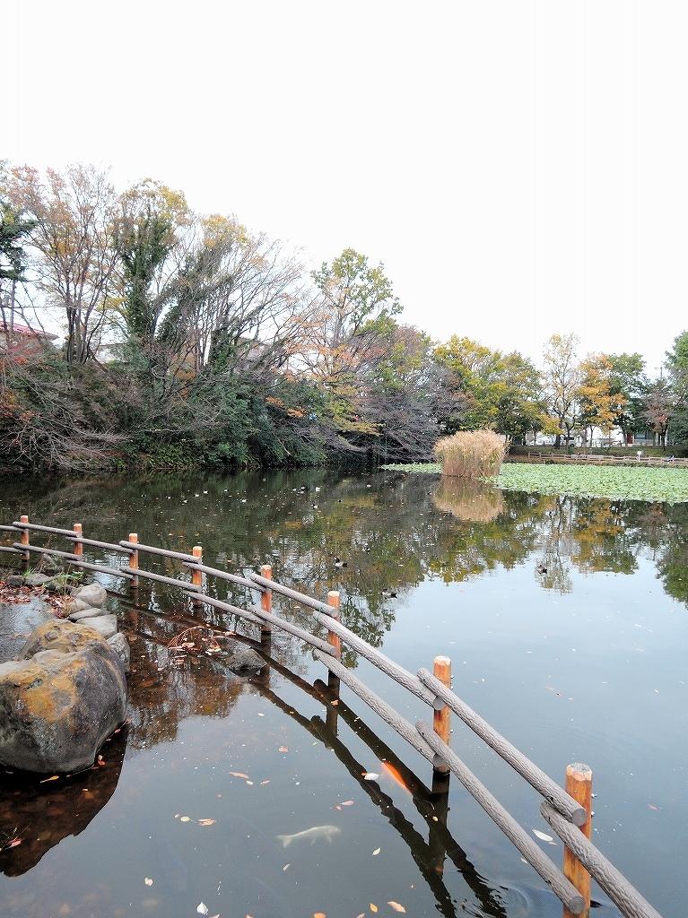 ある風景:Kikuna pond, Yokohama@Dec~Jan #1_d0393923_22291005.jpg