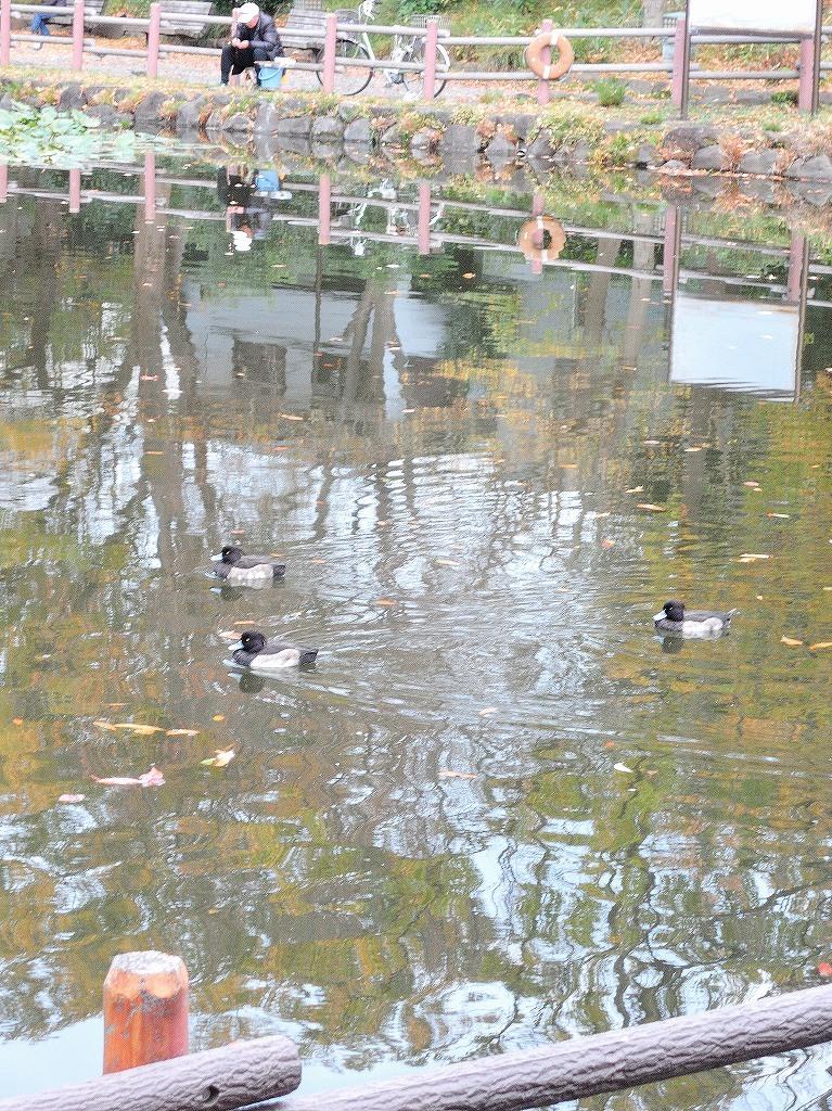 ある風景:Kikuna pond, Yokohama@Dec~Jan #1_d0393923_22291019.jpg
