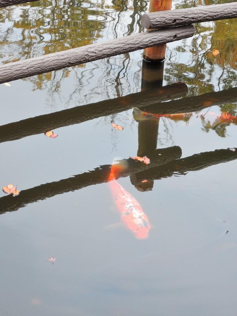 ある風景:Kikuna pond, Yokohama@Dec~Jan #1_d0393923_22291083.jpg
