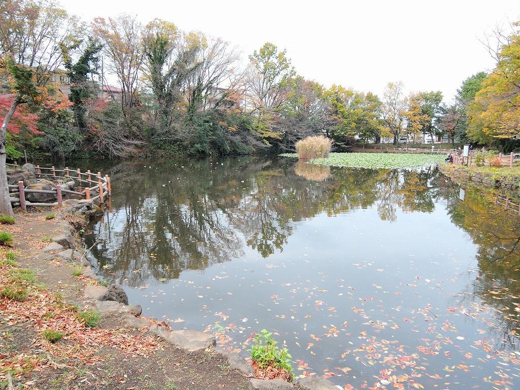 ある風景:Kikuna pond, Yokohama@Dec~Jan #1_d0393923_22291099.jpg
