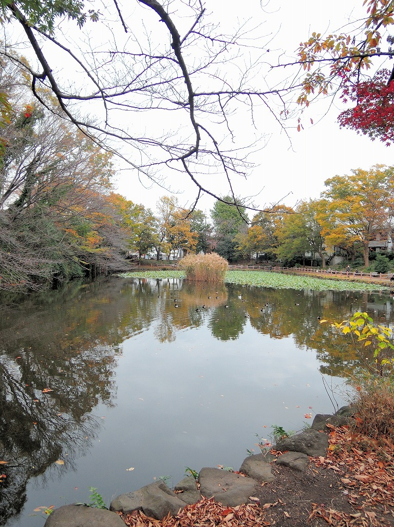 ある風景:Kikuna pond, Yokohama@Dec~Jan #1_d0393923_22292000.jpg