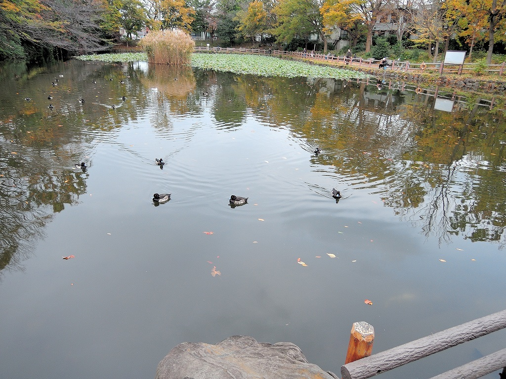 ある風景:Kikuna pond, Yokohama@Dec~Jan #1_d0393923_22292038.jpg