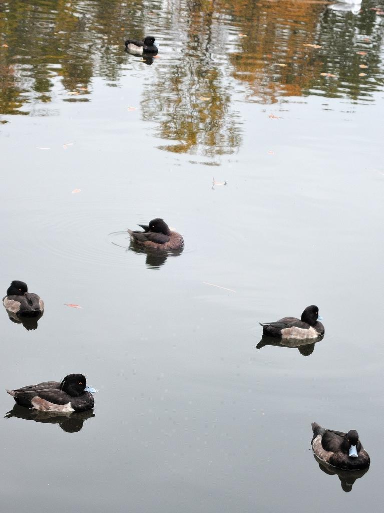 ある風景:Kikuna pond, Yokohama@Dec~Jan #1_d0393923_22292122.jpg