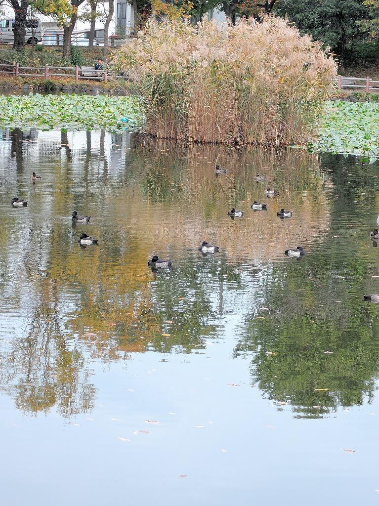 ある風景:Kikuna pond, Yokohama@Dec~Jan #1_d0393923_22292179.jpg