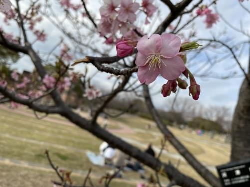 戸田川緑地へ行ってきました♪_f0373339_14154347.jpeg