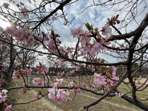 戸田川緑地へ行ってきました♪_f0373339_14155413.jpeg