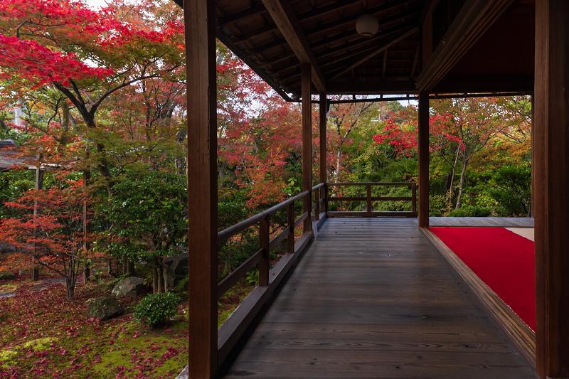 2020紅葉きらめく京都 大法院の敷紅葉_f0155048_23280594.jpg