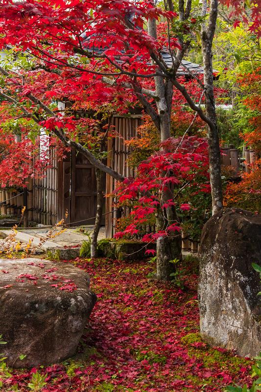 2020紅葉きらめく京都 大法院の敷紅葉_f0155048_23284175.jpg