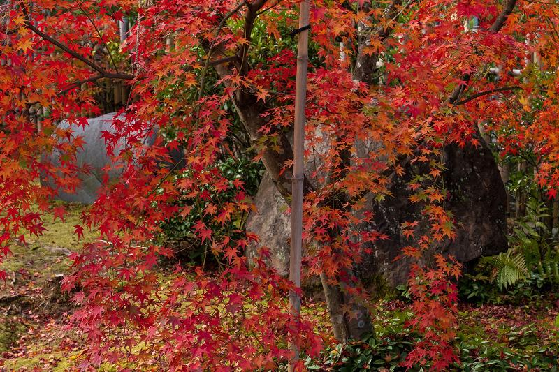 2020紅葉きらめく京都 大法院の敷紅葉_f0155048_23284461.jpg