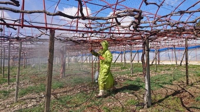 「ぶどう栽培も掃除から」_d0230486_10014703.jpg