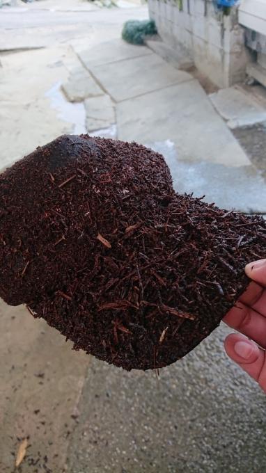 「ぶどう栽培も掃除から」_d0230486_13215781.jpg
