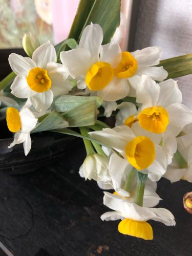 ベランダの鉢植えの水仙が見事に咲いてくれました もう春はすぐそこまで来ています_e0295491_07054546.jpg
