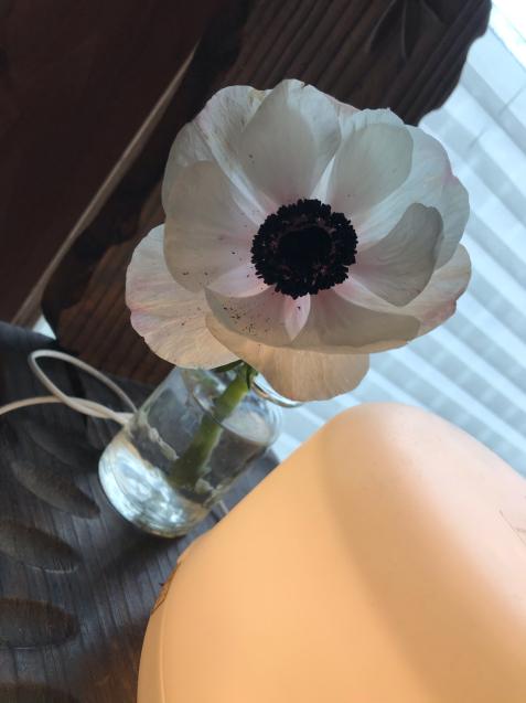 花・花・花  /  yoshi_d0135801_20073978.jpg