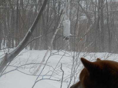 2月16日 火曜日 0度  雪_f0210811_12030327.jpg