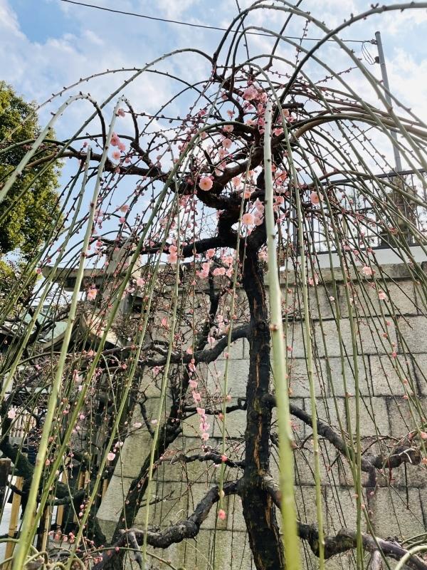 春は優しくゆっくり NO.724_c0102513_18014298.jpeg