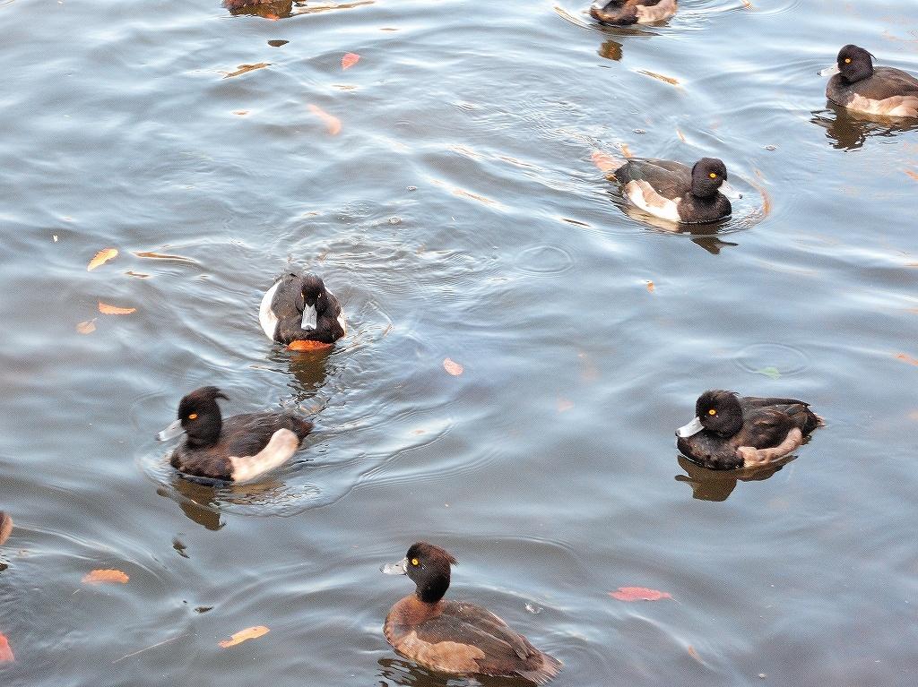 ある風景:Kikuna pond, Yokohama@Dec~Jan #2_d0393923_23455901.jpg