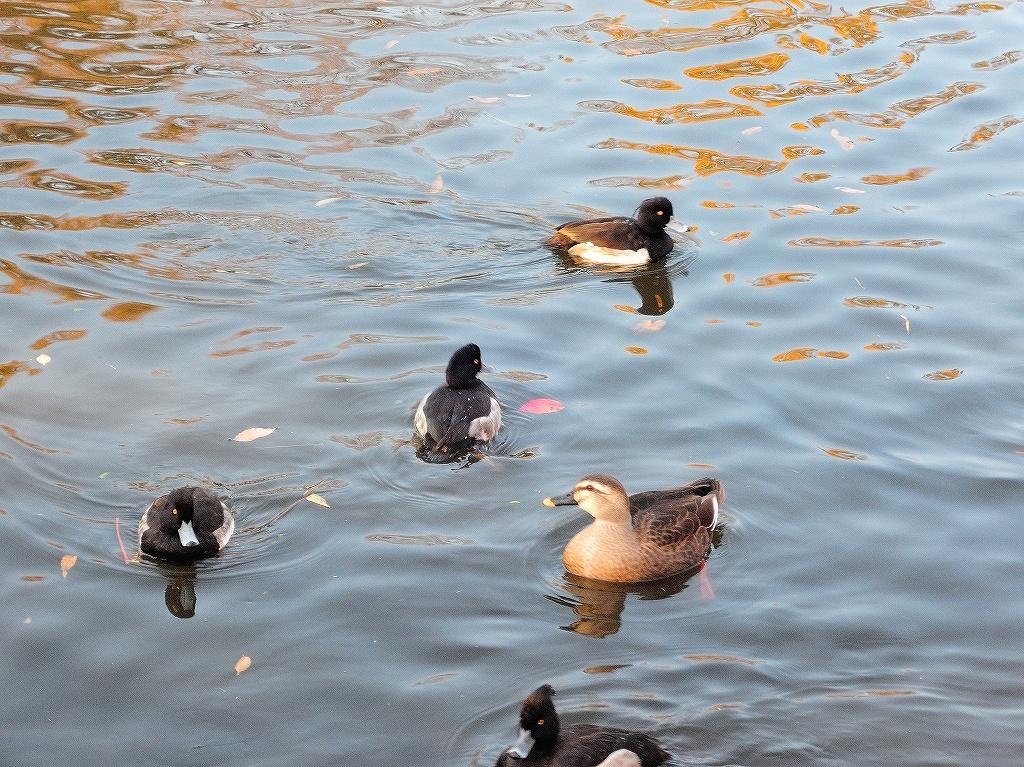 ある風景:Kikuna pond, Yokohama@Dec~Jan #2_d0393923_23455940.jpg