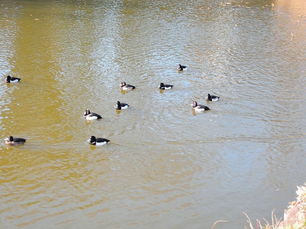 ある風景:Kikuna pond, Yokohama@Dec~Jan #2_d0393923_23455973.jpg