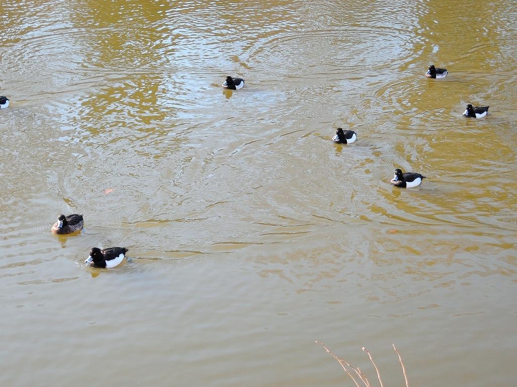 ある風景:Kikuna pond, Yokohama@Dec~Jan #2_d0393923_23460563.jpg