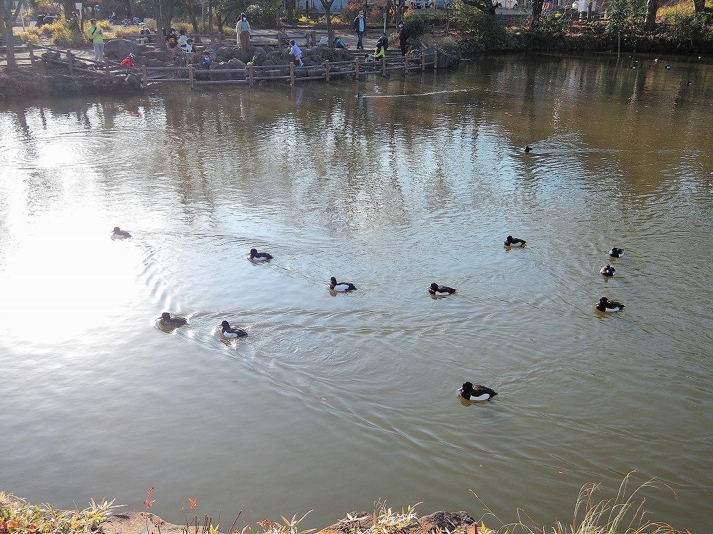 ある風景:Kikuna pond, Yokohama@Dec~Jan #2_d0393923_23460580.jpg