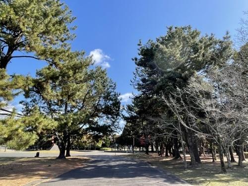 庄内緑地公園へお散歩♬_f0373339_16342823.jpeg