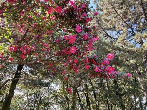 庄内緑地公園へお散歩♬_f0373339_16365486.jpeg