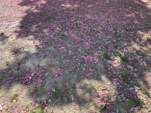 庄内緑地公園へお散歩♬_f0373339_16370520.jpeg