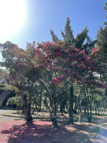 庄内緑地公園へお散歩♬_f0373339_16375191.jpeg
