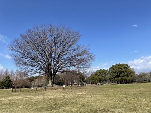 庄内緑地公園へお散歩♬_f0373339_16382381.jpeg