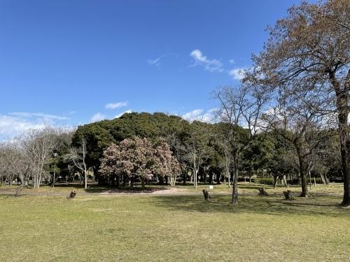 庄内緑地公園へお散歩♬_f0373339_16395797.jpeg