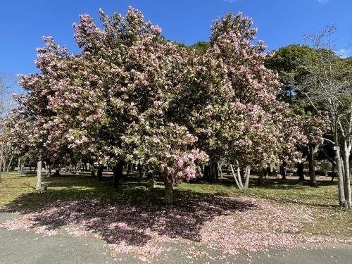 庄内緑地公園へお散歩♬_f0373339_16401265.jpeg