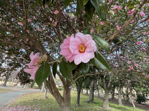 庄内緑地公園へお散歩♬_f0373339_16403860.jpeg