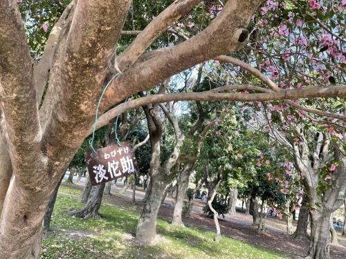 庄内緑地公園へお散歩♬_f0373339_16411035.jpeg