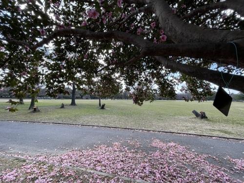 庄内緑地公園へお散歩♬_f0373339_16414434.jpeg
