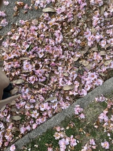庄内緑地公園へお散歩♬_f0373339_16415458.jpeg